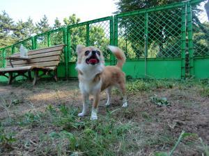 2010-8-31bibi10.jpg
