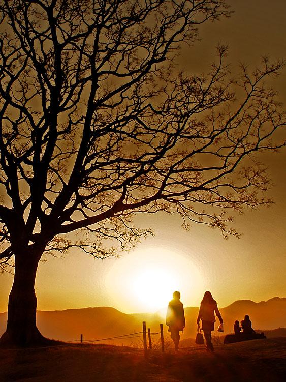 130112丘の上の樹@吾妻山公園3