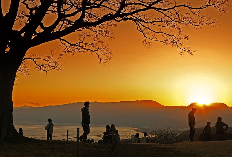 130112丘の上の樹@吾妻山公園2