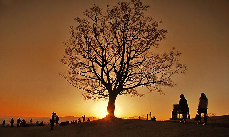 130112丘の上の樹@吾妻山公園1
