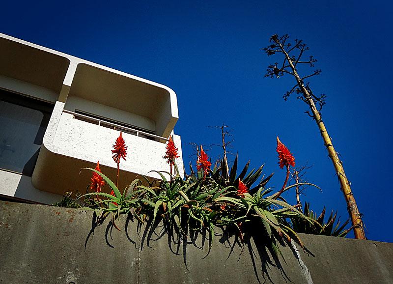 130120青空とアロエの花
