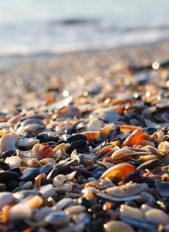 130210貝殻の吹き溜まり