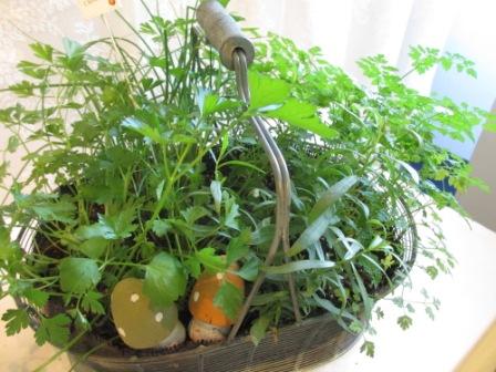 フイーヌゼルブの寄せ植え