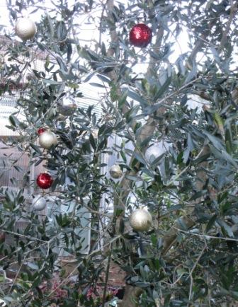 オリーブの木のクリスマス