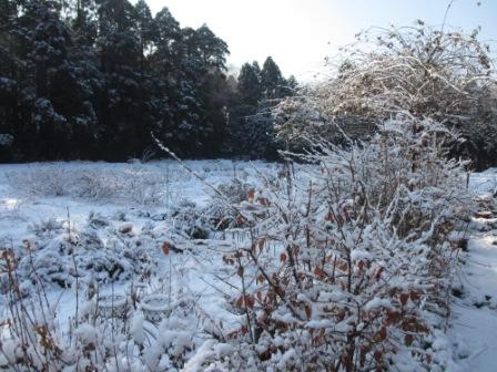 ハーブガーデンの初雪2