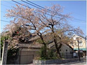 京都240418_02