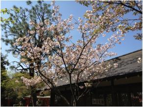 京都240418_04
