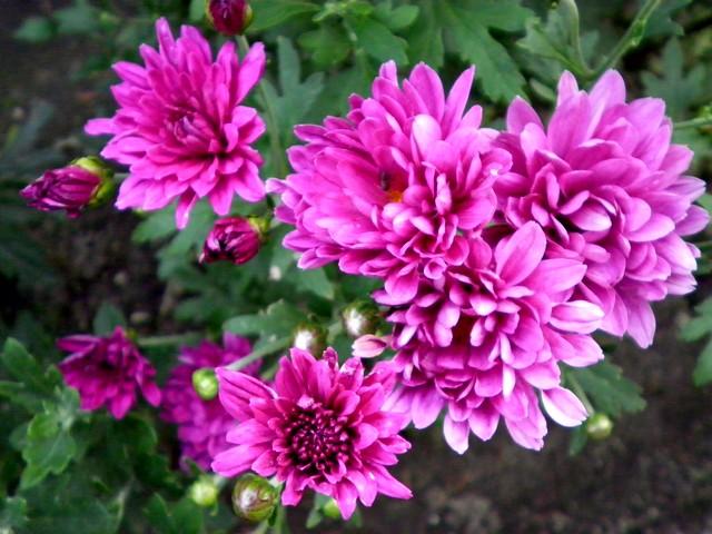 fwa_20100729161412.jpg