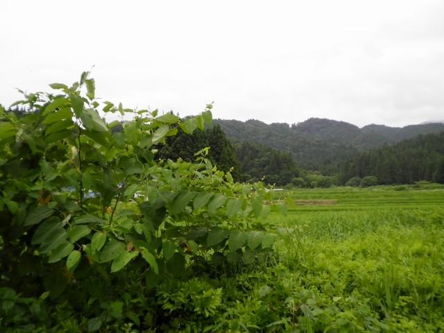 yama_20100716103254.jpg