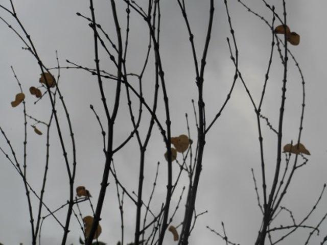 枯れ葉(640)