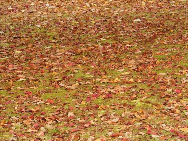 秋色絨毯(640)