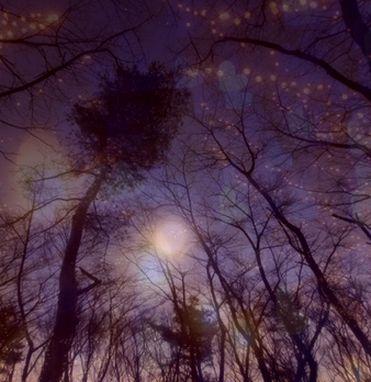 森の夜景 合成