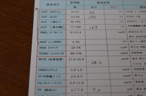 DSC_0406_convert_20130126201517.jpg