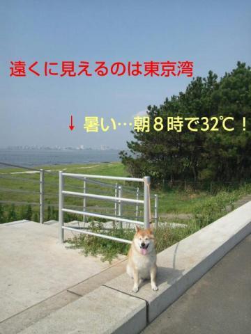 20130814_140956.jpg