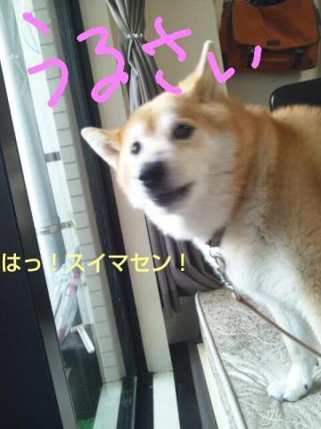 20130816_113007.jpg