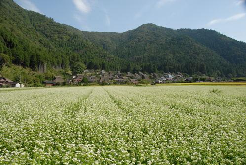 美山 蕎麦01