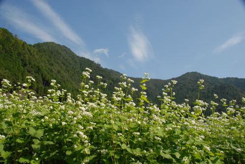 美山 蕎麦03