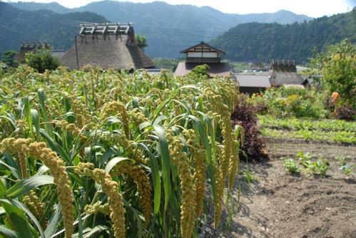 美山 蕎麦05