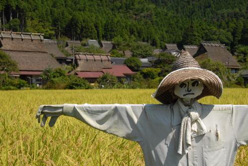 美山 蕎麦08