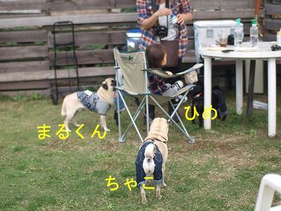 s-2011_10230046.jpg