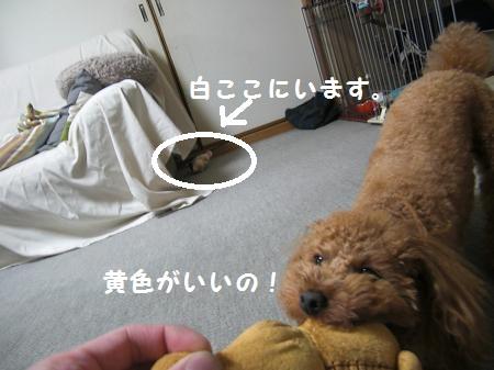 CIMG5766_convert_20110516215707-1
