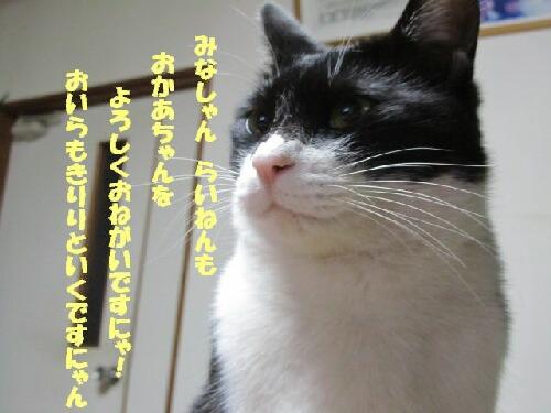 くぅの誓い