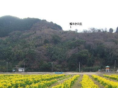 井田の花0002