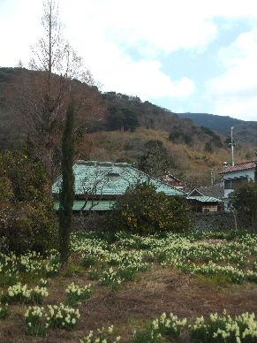 井田の花0005