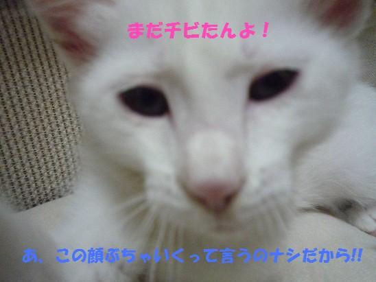 2010_0625_210352-P1010568  2