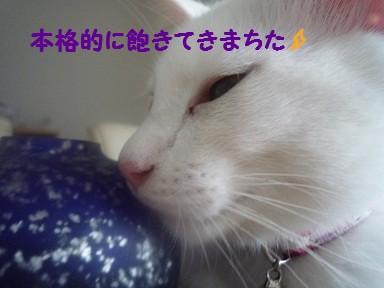 2010_0731_090451-P1010799  2