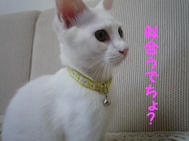 2010_0808_160632-P1010838  2