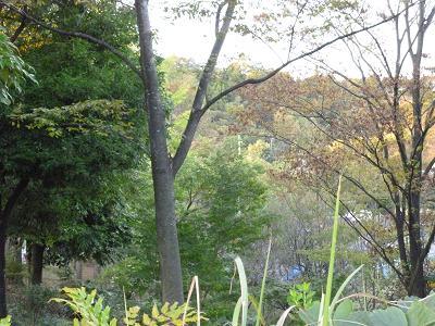 お散歩鍛冶の谷戸公園 017