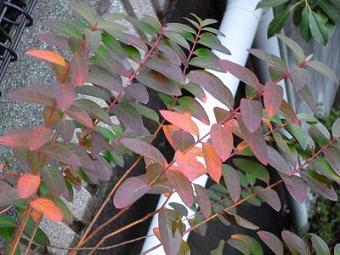 庭の枯れた葉など 010