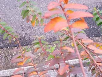 庭の枯れた葉など 011