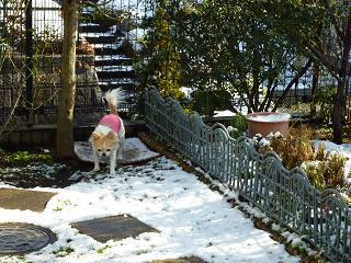 庭の雪 003