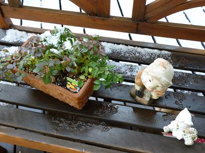 庭の雪 004