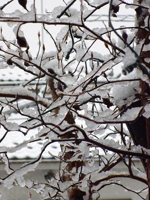 雪景色 010