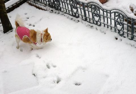 雪景色 005