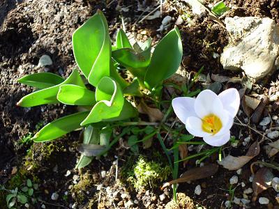 庭のお花 003