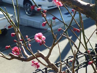 庭のお花 005