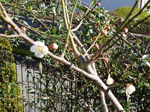 庭のお花 007