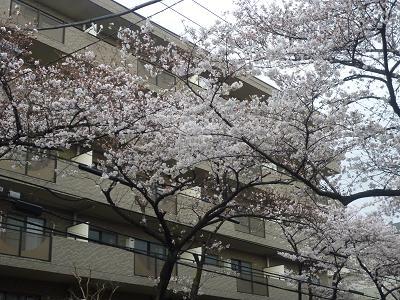 明澄ちゃん宅あとタマプラ夕飯 004