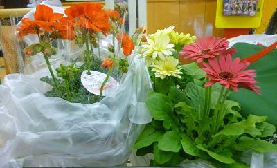 お花やヤマトの 011