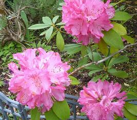 庭に咲いた花 002