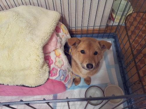 新人子犬2