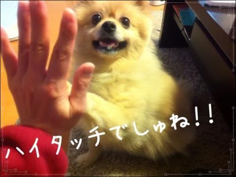 ハイタッチでしゅね!!