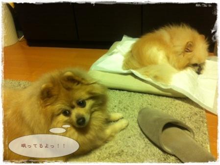 眠ってるよ!!