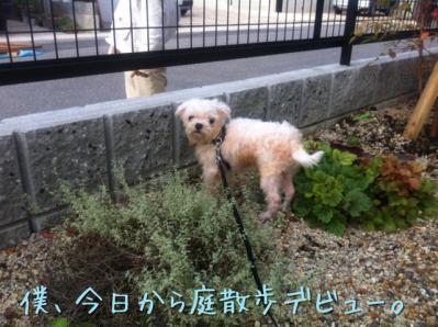 僕、今日から庭散歩デビュー。
