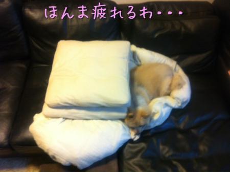 ほんま疲れるわ・・・