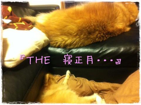 『THE 寝正月・・・』
